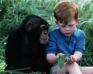 insan-ve-maymun-benzer-mi-1 İnsanla maymun arasındaki genetik benzerlik %98 midir? Bu benzerlik evrime delil olabilir mi?