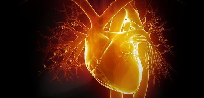 kalbi_hastalik2-702x336 Kalp Nedir ?