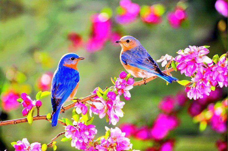 Zatî güzellik ve neticeleri itibariyla güzellik