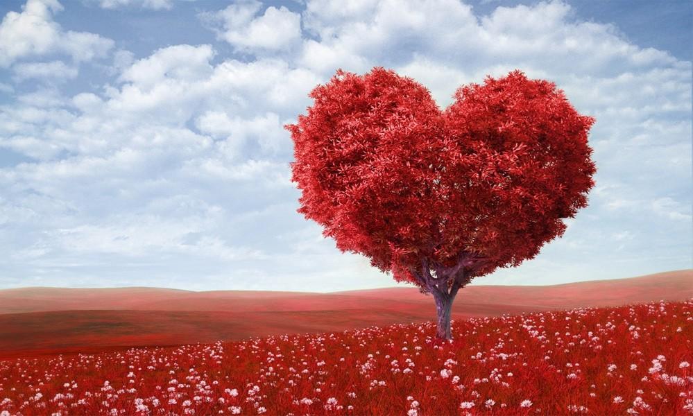 5545 Sadr-Kalb-Akıl İlişkileri