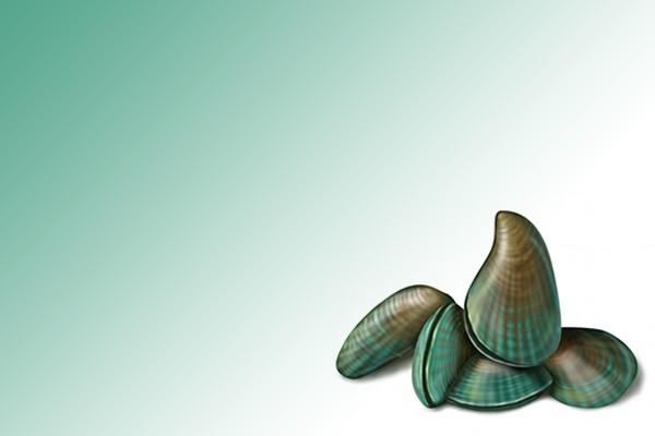 midye-yemek-haram-midir Midye Haram mı Değil mi? Modernist İddialar ve Cevaplar