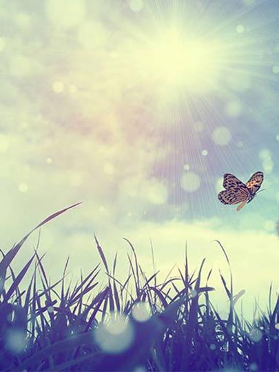 ozgurluk-ve-mutluluk Özgürlük ve Mutluluk Anlayışımız